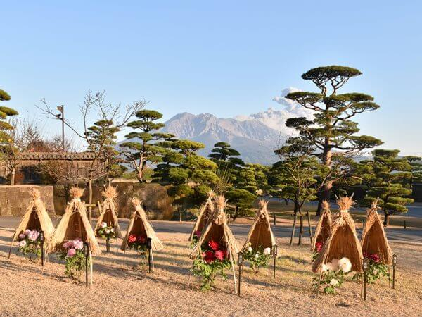 冬季牡丹花展示