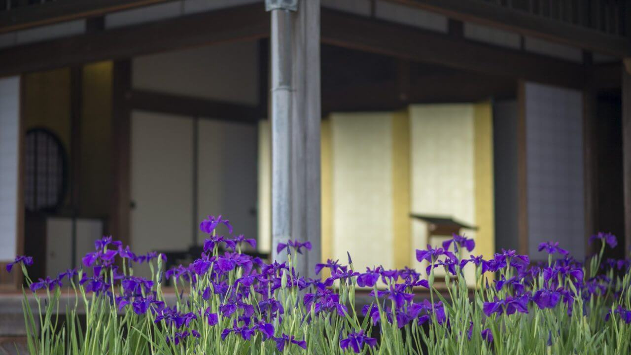 irises outside the house at Sengan-en with gold screen